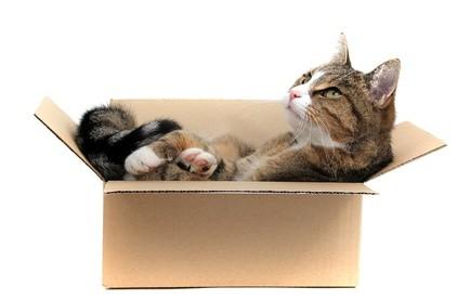 d m nager avec son chat. Black Bedroom Furniture Sets. Home Design Ideas